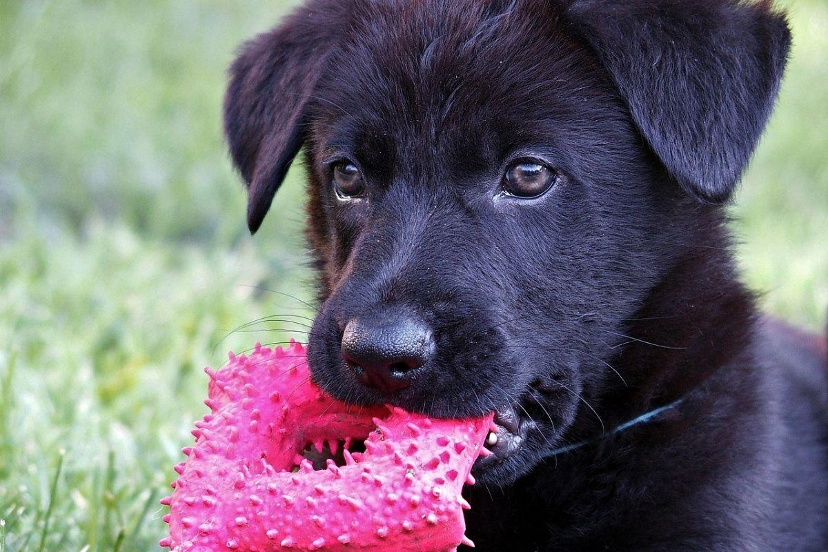 cane tiene in bocca un gioco colorato