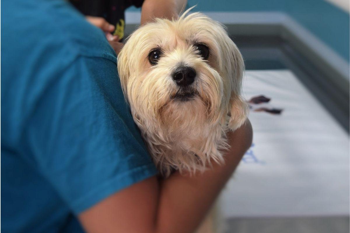 cane in braccio ad un veterinario
