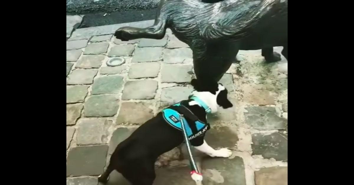 Boston Terrier arrabbiato con statua di cane che orina