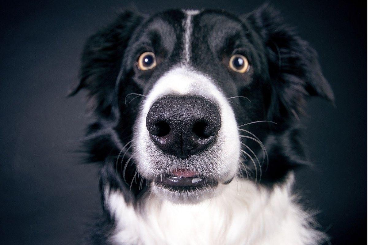 cane bianco e nero con occhi spalancati