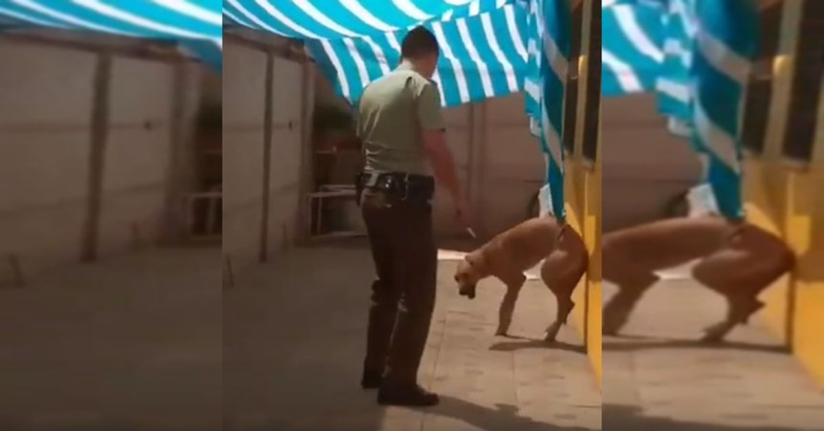 cane contento perché il carabiniere lo ha liberato