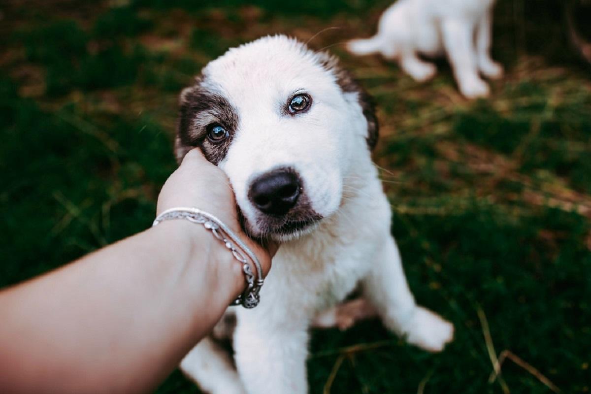 cane riceve una carezza