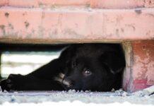 cane nero si nasconde