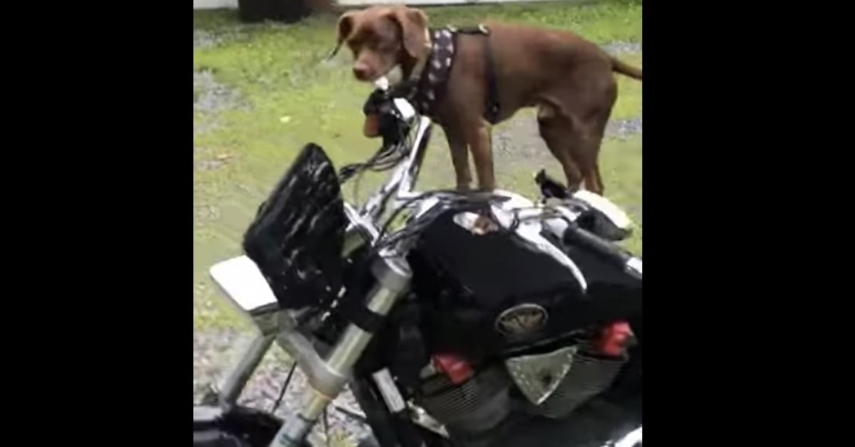cane felice sale sulla moto