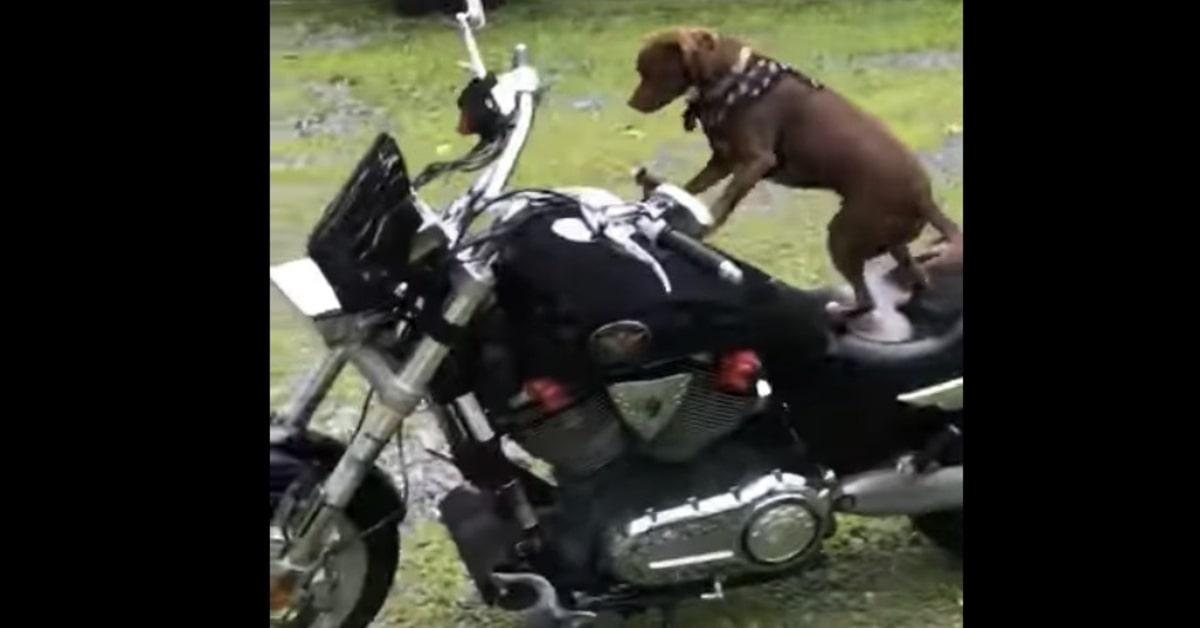 cane sale sulla moto emozionato