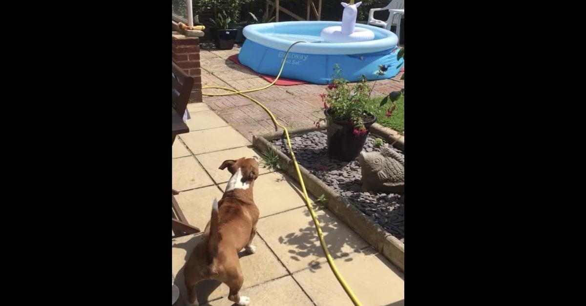 cane non sopporta unicorno in piscina