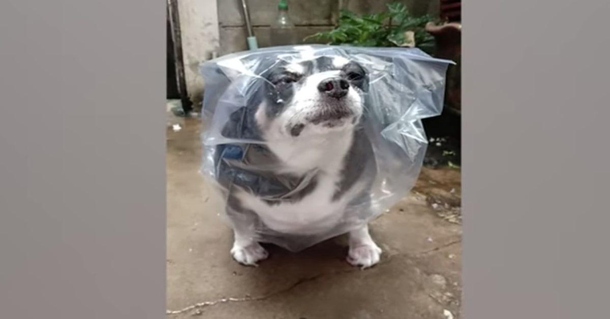 cane felice con impermeabile fatto con una busta di plastica