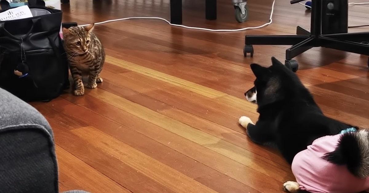 cane difende la borsa dal gatto