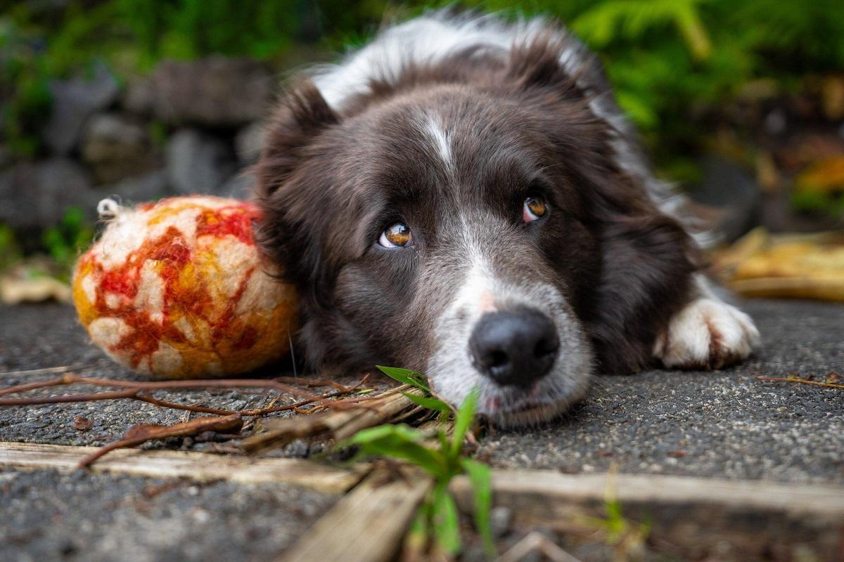Il cane dove può nascondere le cose, quando gioca?