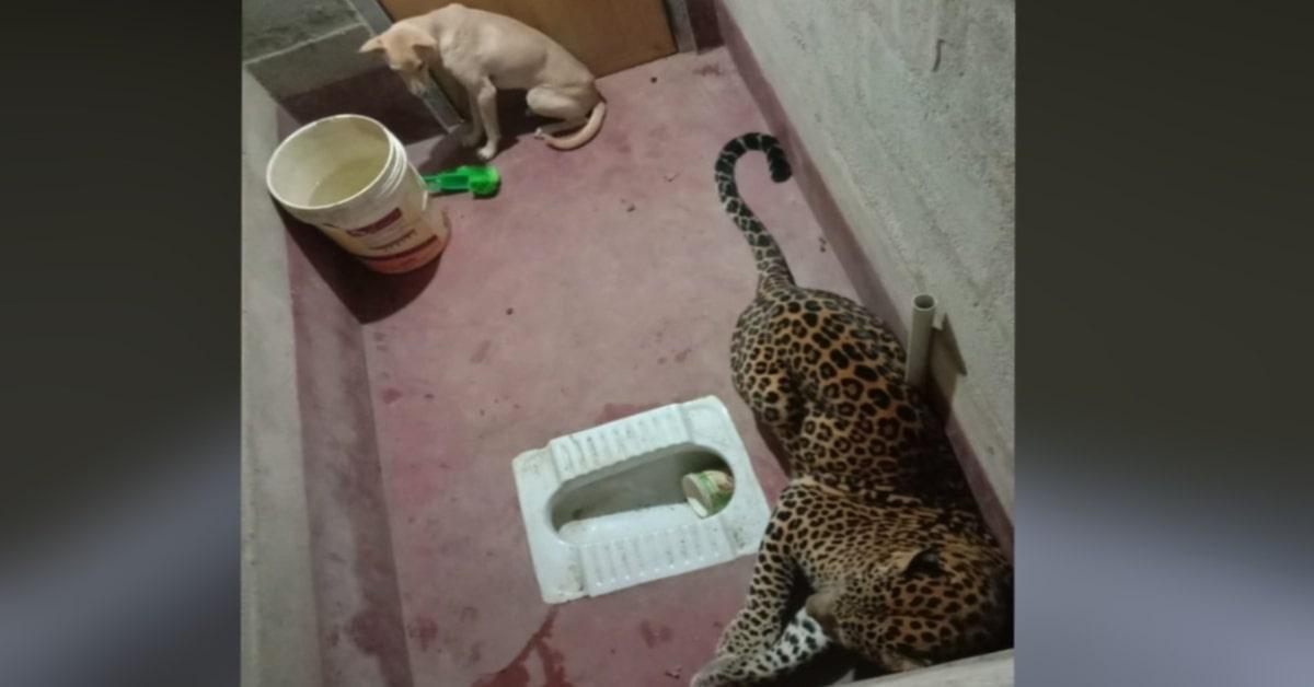 cane e leopardo non si fanno del male