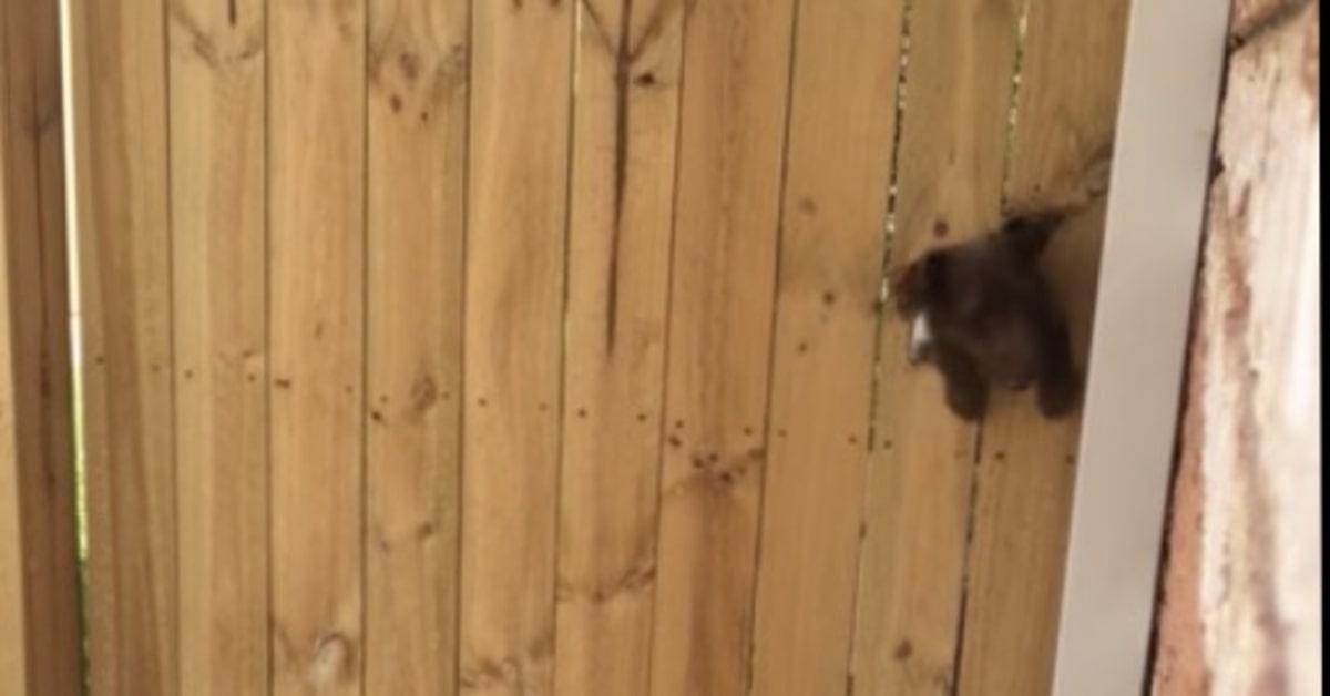 cane riesce ad uscire da un buco nel muro