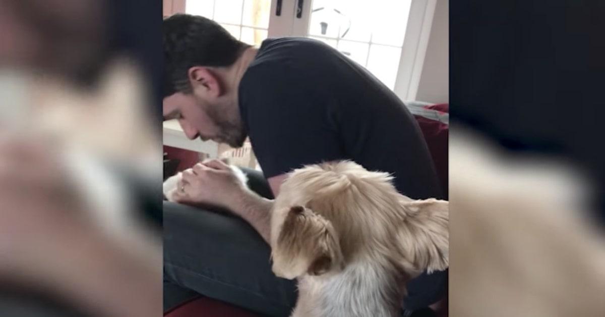 cane guarda geloso padrone che gioca con altro cane
