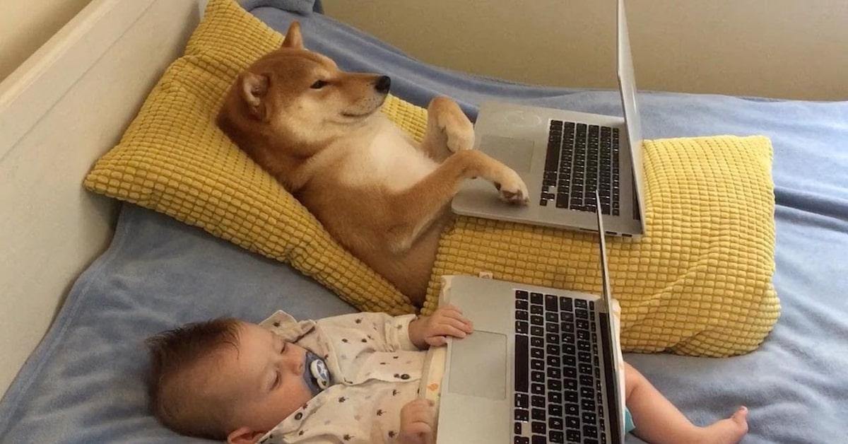 cane e bimbo inseparabili guardano film