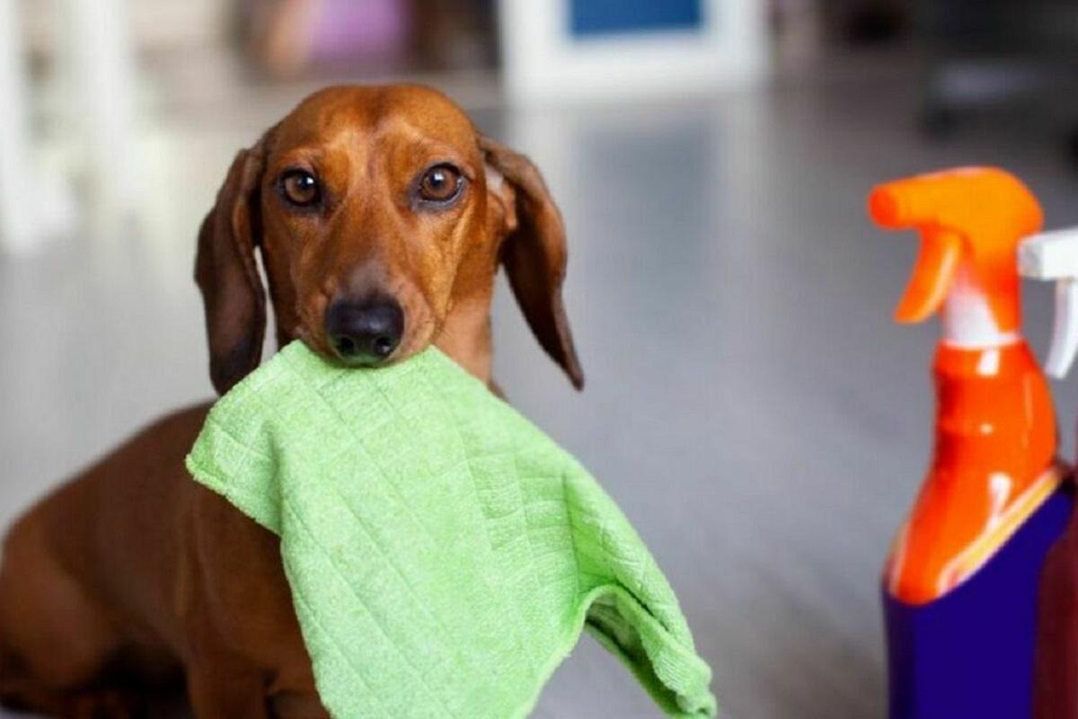 cane e prodotti per la pulizia