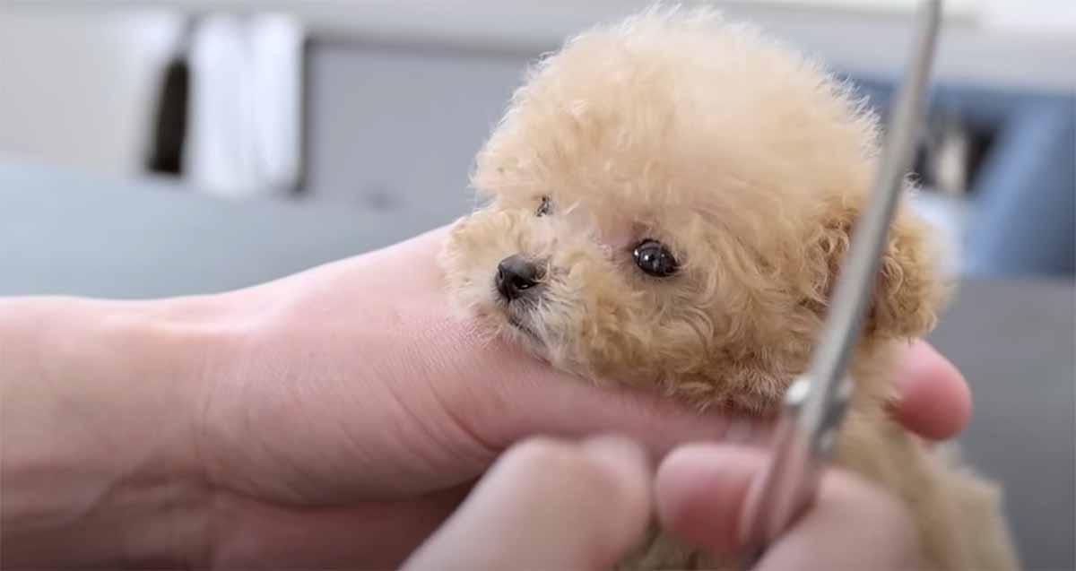 cane minuscolo si fa bello