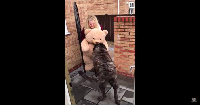 cane felice per il regalo