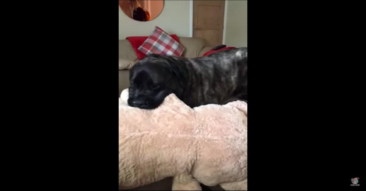 cane contento con il peluche