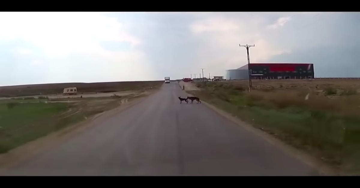 cane salva suo simile