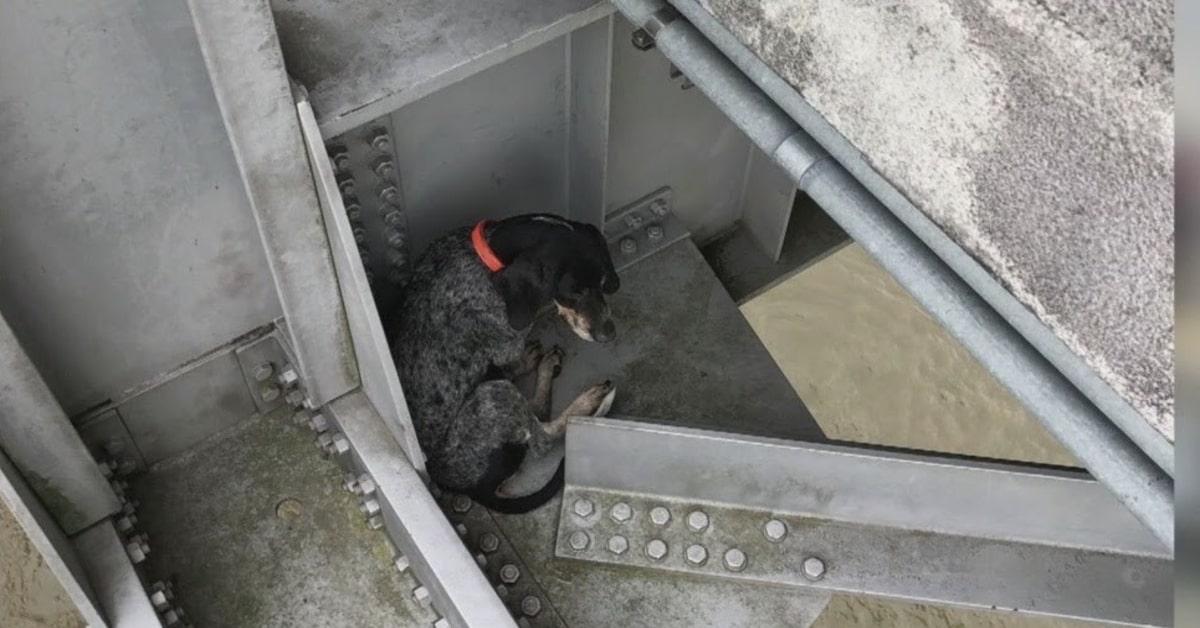 cane in pericolo salvato