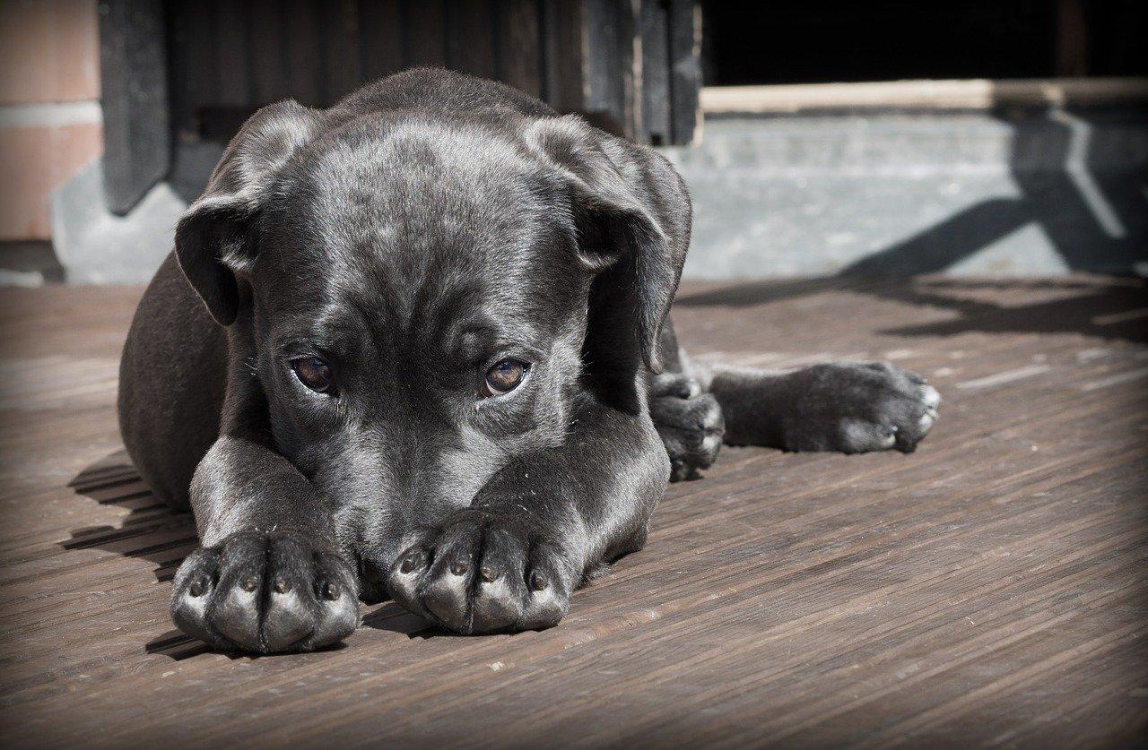 Il cane sotterra le cose: è normale?
