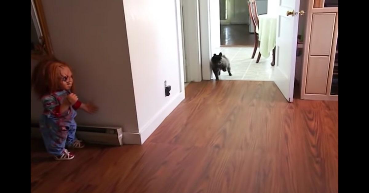 cane scappa vedendo bambola di Chucky