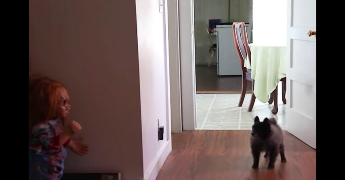 cane reagisce spaventato quando vede Chucky