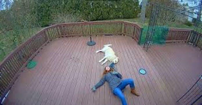 cane tira padrona per il cappuccio e lei ride