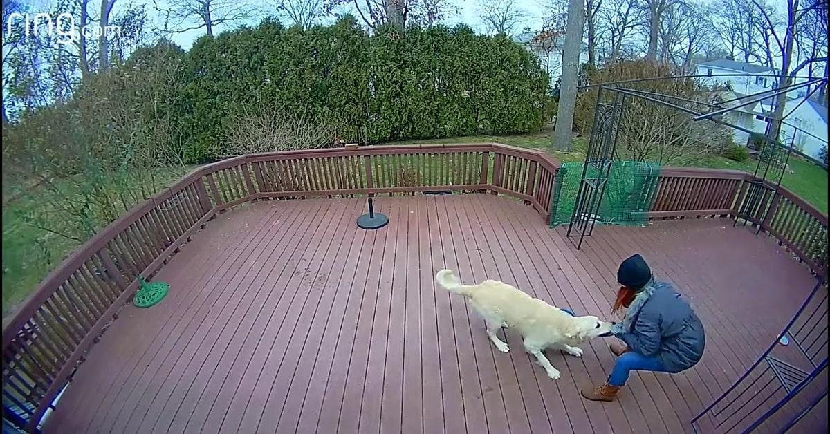 cane Grissom gioca con la padrona trascinandola per il cappuccio