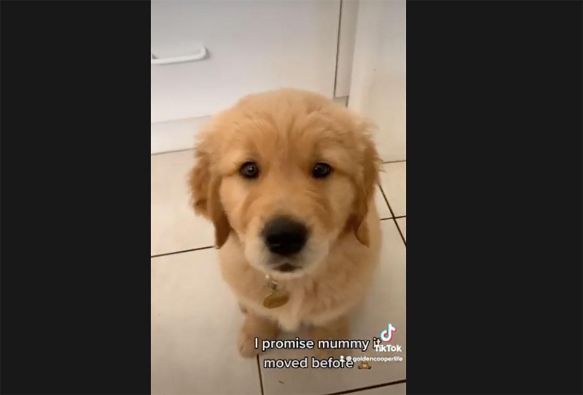 cane vede aspirapolvere per la prima volta