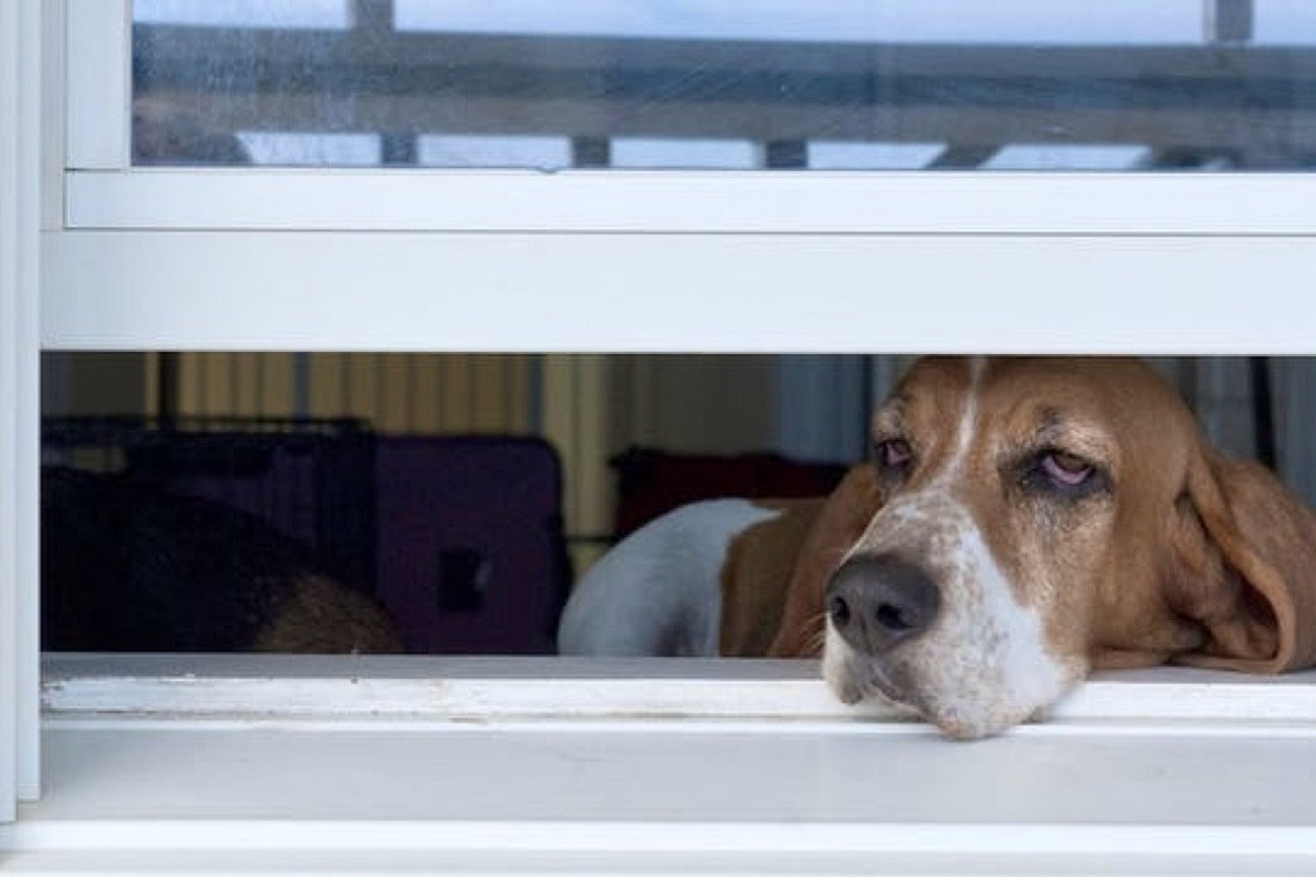 cane con muso fuori dalla finestra