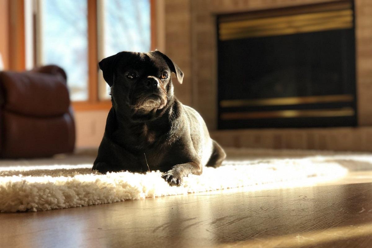 cane da solo in soggiorno