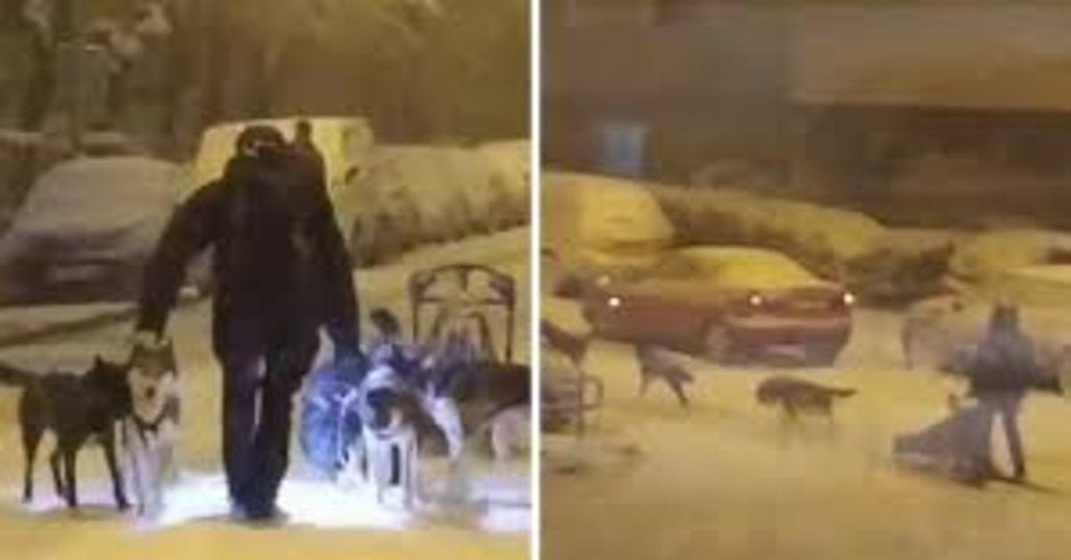 cani con slitta a Madrid, due foto