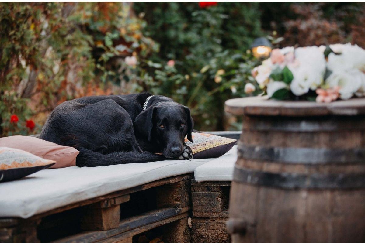 cane accovacciato sul cuscino di una panca
