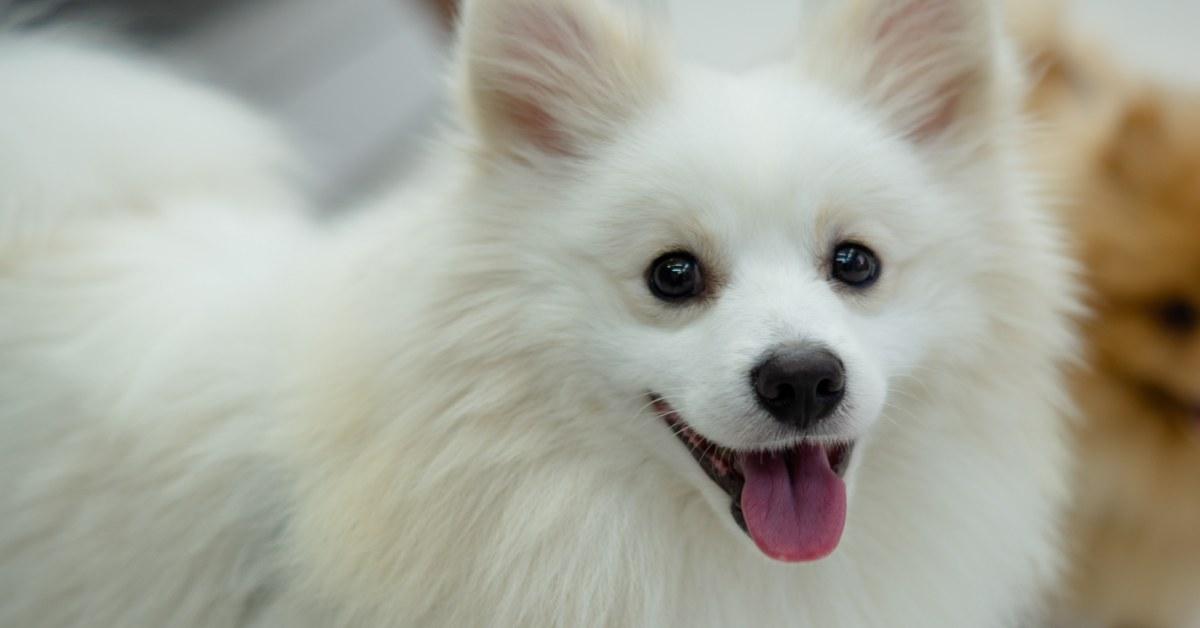 cane con il pelo bianco