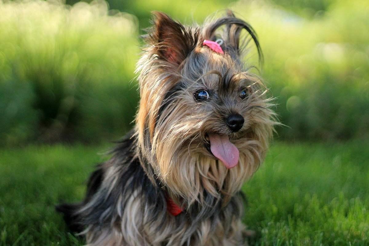 cane con un fiocco in testa