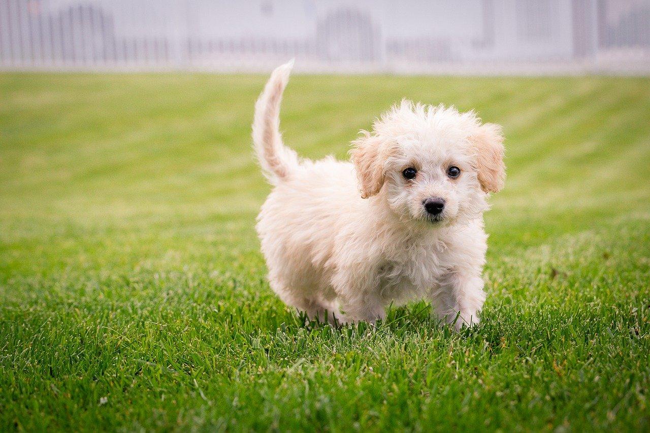 cucciolo in giardino