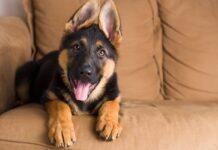 come gestire un cucciolo di cane