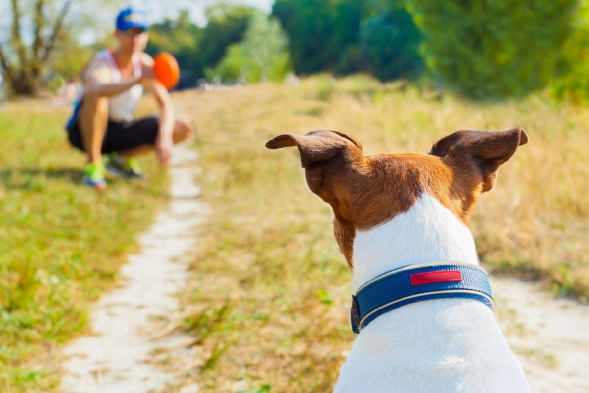 cane che guarda da lontano il suo padrone