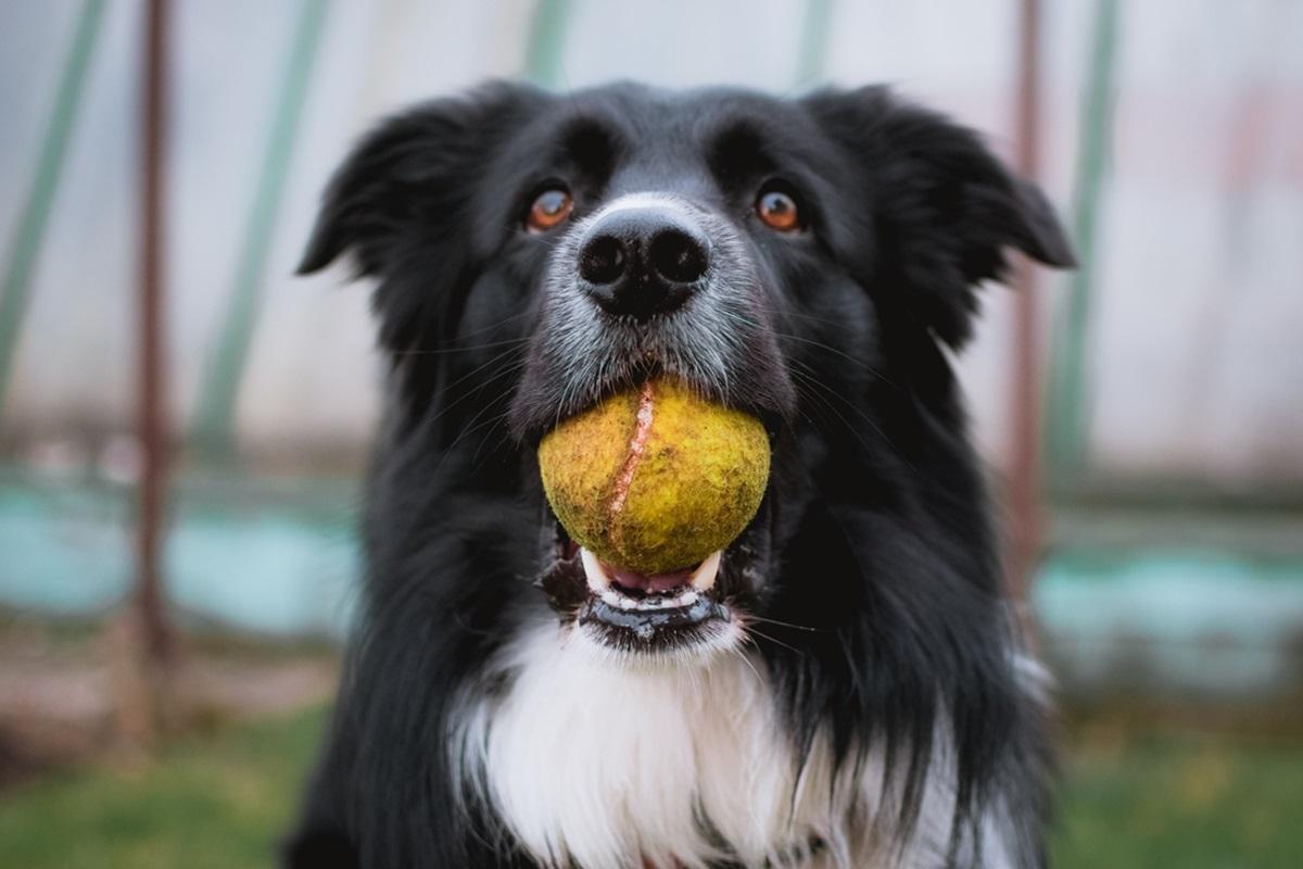 cane nero con palla in bocca