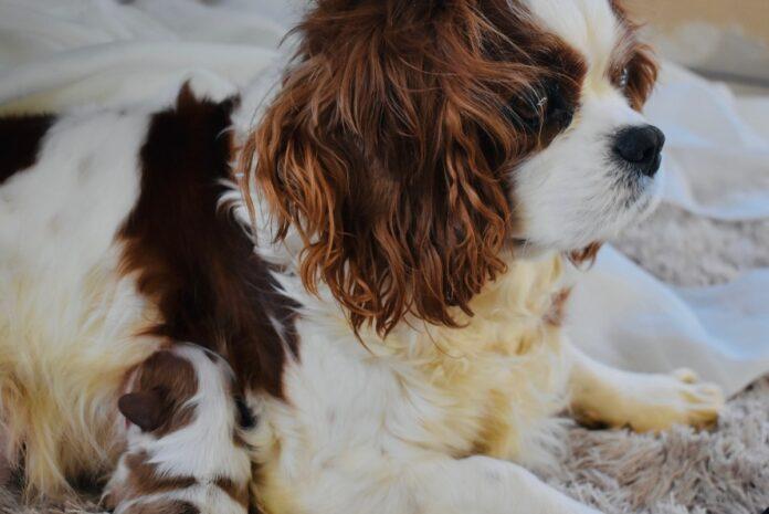 la nascita dei cuccioli di cane