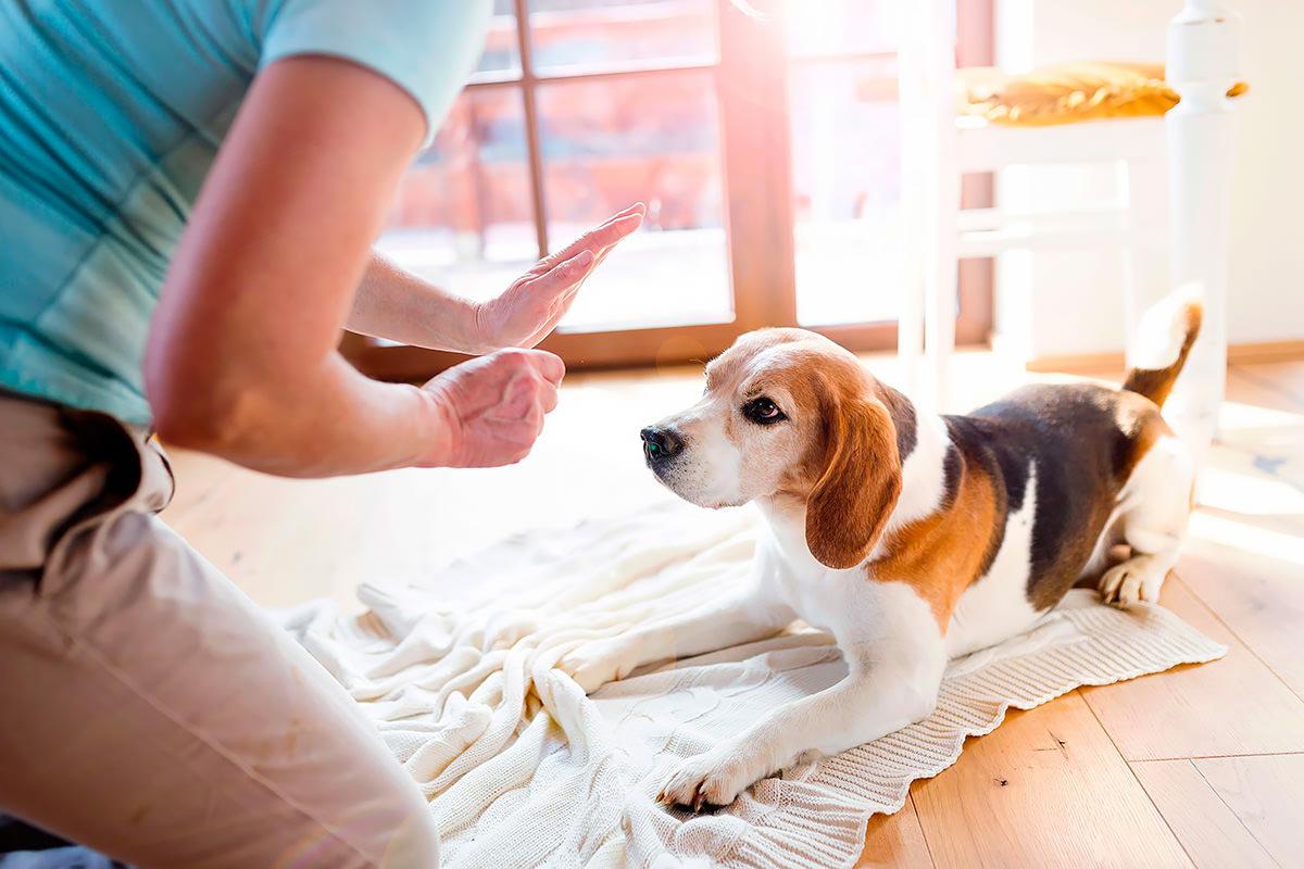 Come sverminare il cane e quando farlo