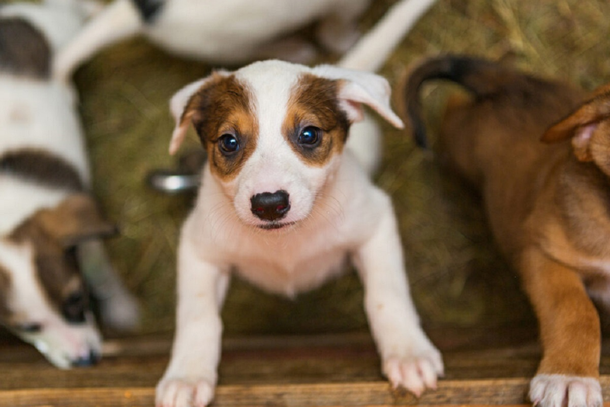 cucciolo di cane si arrampica