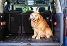 rete da auto per il cane