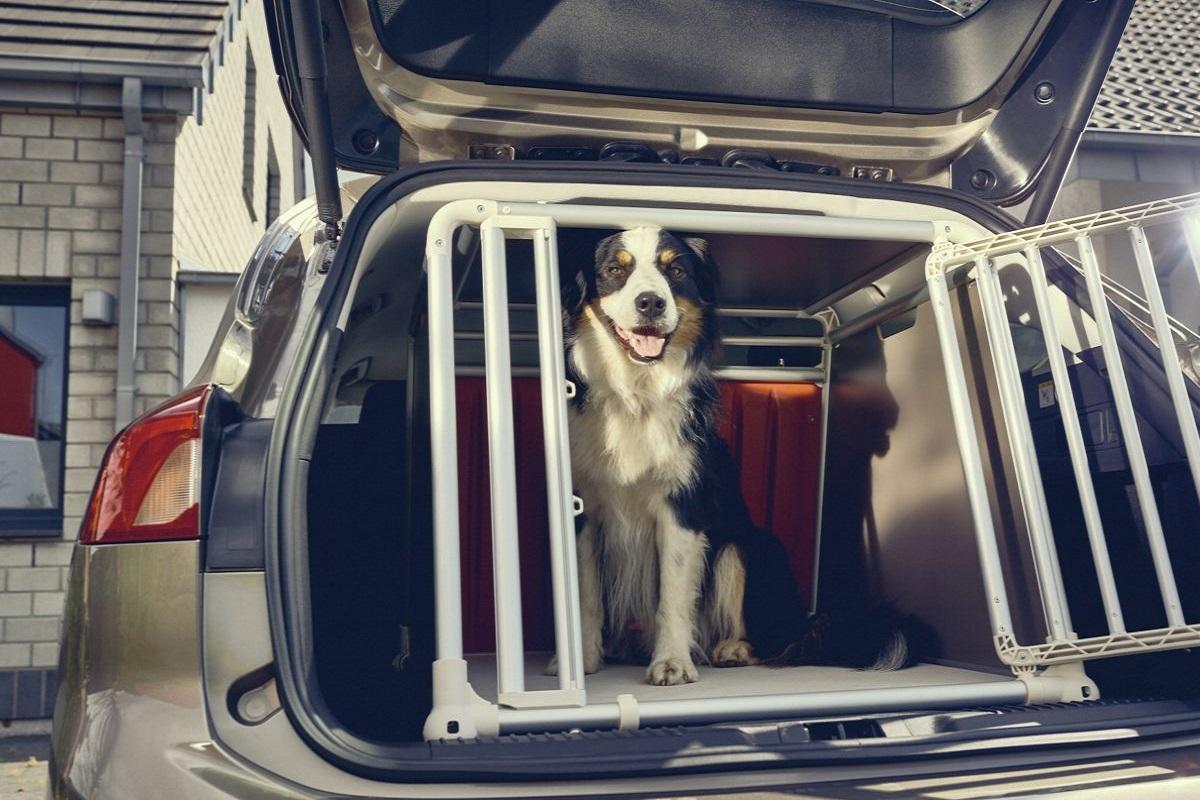 trasportino per cani da macchina