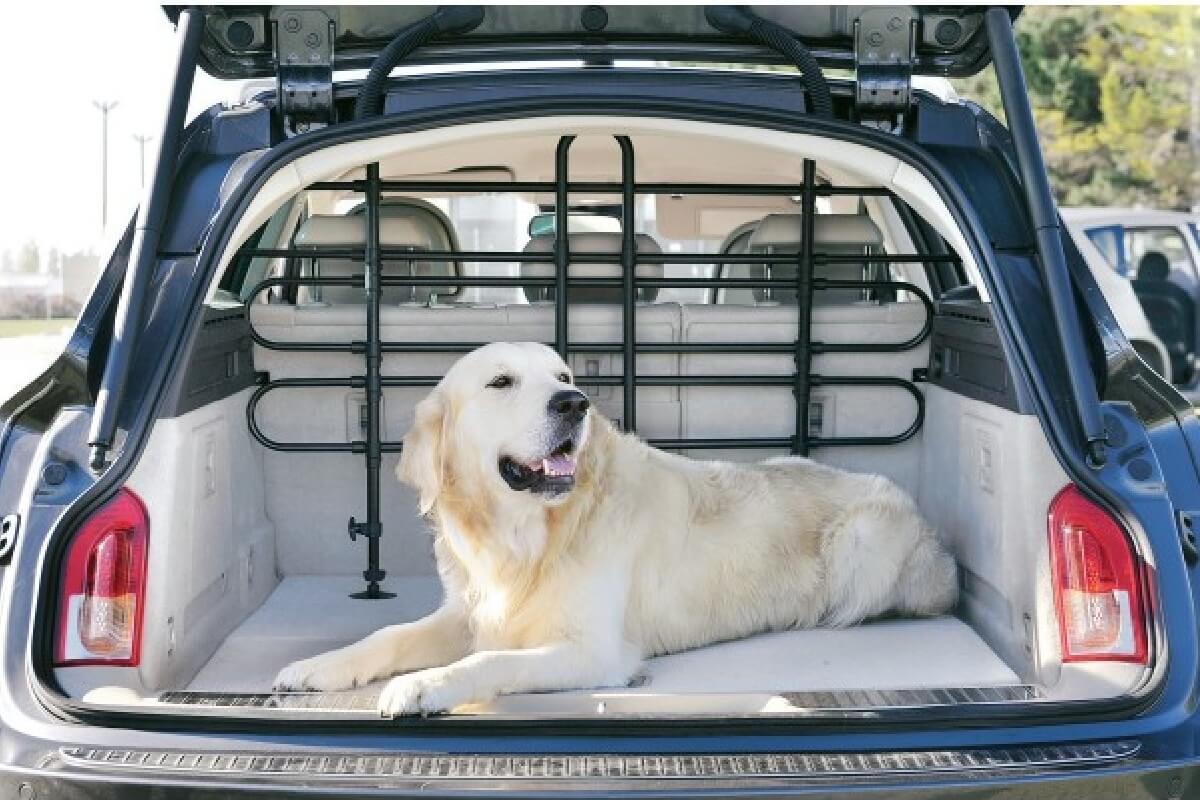 cane nel portabagagli