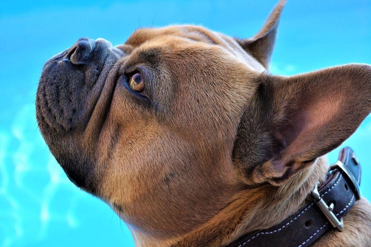 primo piano di un cane che guarda verso l'alto