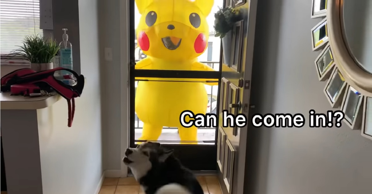 Meeka, la cucciola di Siberian Husky incontra un Pikachu gigante (VIDEO)