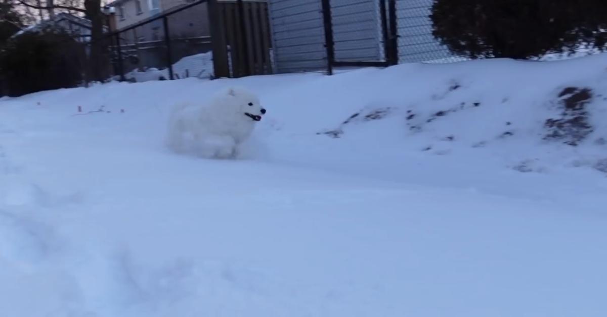 Due cuccioli amano giocare con la neve fresca (VIDEO)