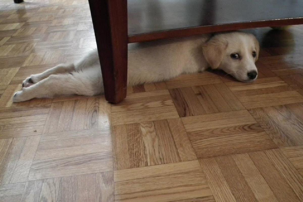 cucciolo di cane nascosto sotto il letto