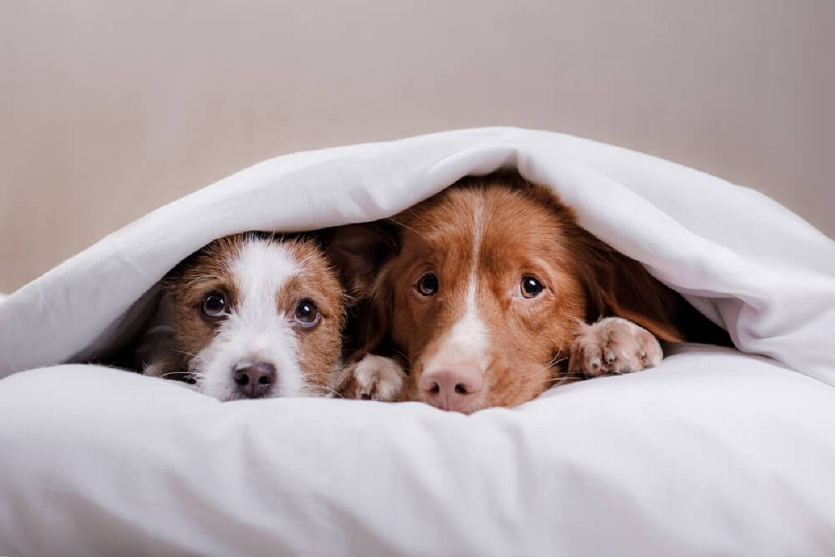 Cuccioli di cane, come comportarsi con loro? Guida completa
